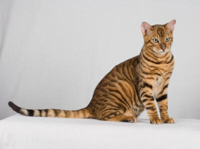 100 facts about cats