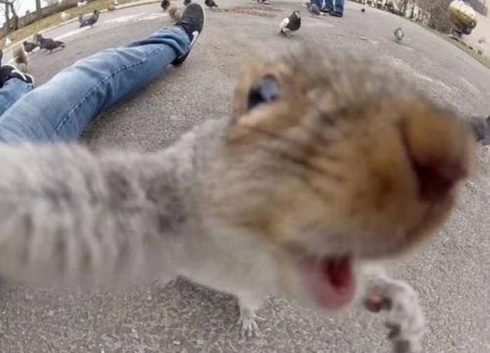 Забавные селфи-фото животных (15 фото)