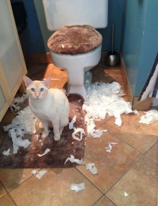 Все любят котиков, но никто их не понимает  животные, кот