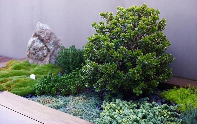 Денежное дерево в суккулентной композиции - всегда отличный штрих ландшафтного дизайна вашего двора