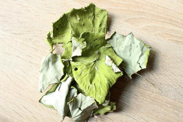 Лист мать-и-мачехи - одно из самых популярных средств от кашля
