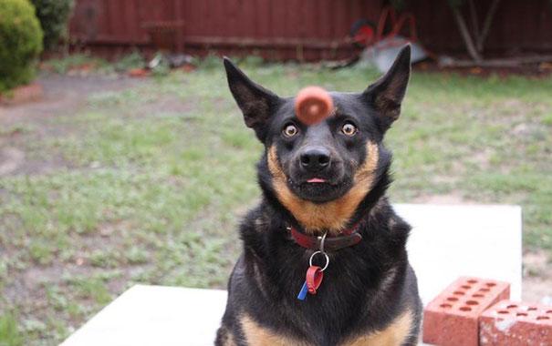 25 удачных кадров с собаками-63