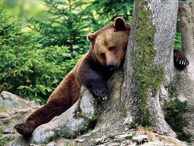 Смешные медведи, ведут себя как люди, забавные медведи