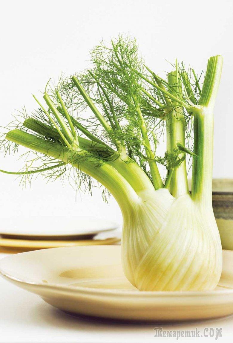 Фенхель: полезные свойства и калорийность. Рецепты блюд из фенхеля