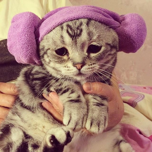 Грустная кошка по кличке Луху (14 фото)