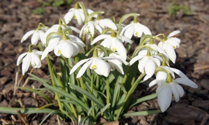 Отличное растение, но не на участке. |Фото: www.nn.ru.