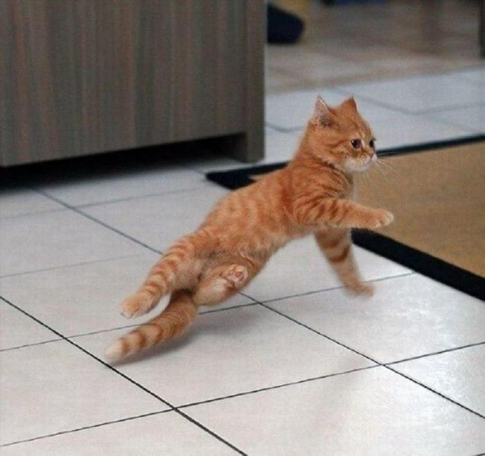 Брейк-данс от домашнего кота.