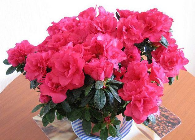 flowertimes.ru