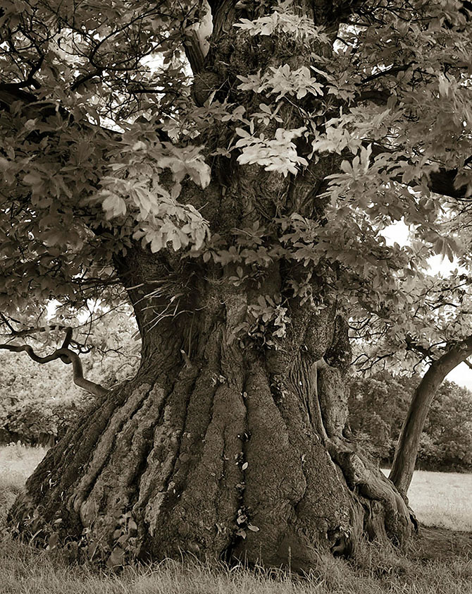 Самые старые деревья на Земле