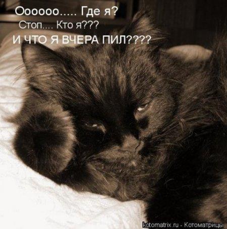 Воскресные котомашки.