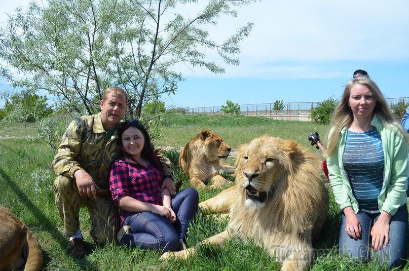 Тайган сафари со львами