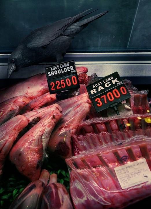 CuriousAnimals07 Животные в супермаркете