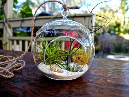 «Воздушные» растения: 14 забавных идей для дома фото 7