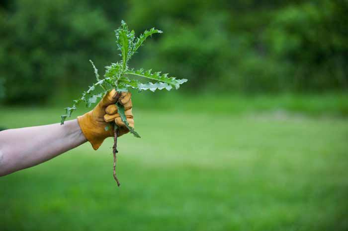 Сорняки – крайне редкие гости на таком покрытии
