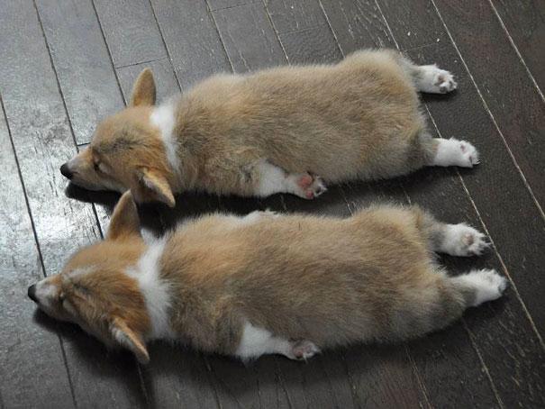 Животные-близнецы - 25 очаровательных фото-15