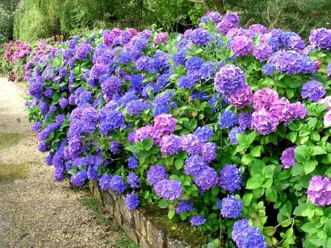кислая почва, как сделать почву кислой, как закислить почву, цветы для кислых почв, растения для кислых почв, растения любящие кислые почвы