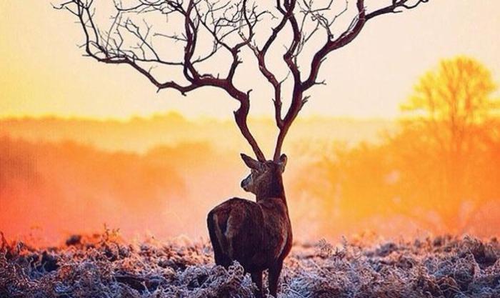 Олень с огромными рогами в виде дерева.