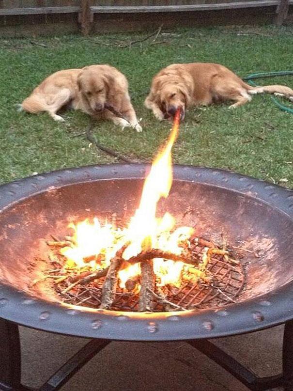 25 удачных кадров с собаками-58