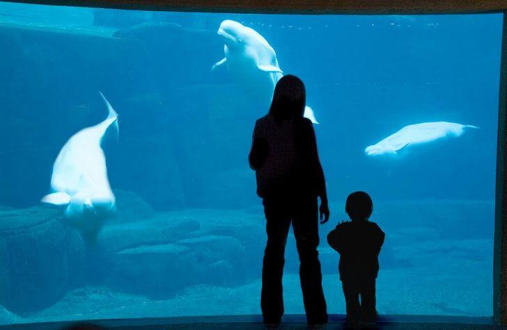 vancouver-aquarium
