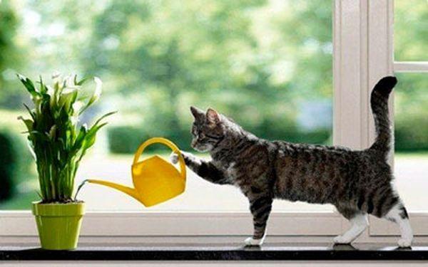 Переувлажнение субстрата негативно влияет на растение