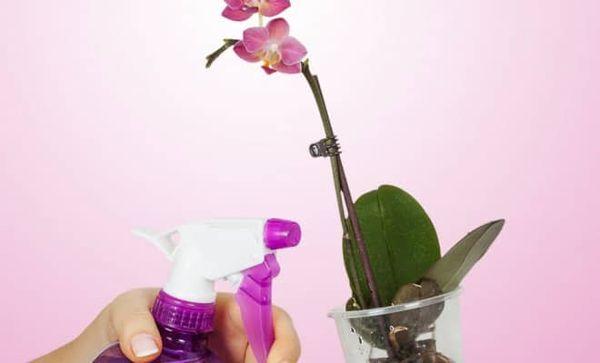 Витамины рекомендовано распылять на растение