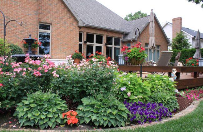Хоста - элемент ландшафтного дизайна для загородного дома