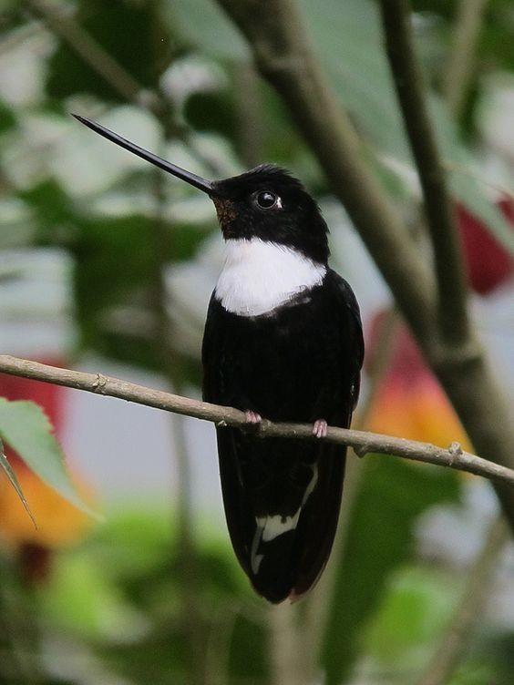 Колибри едят примерно каждые 15 минут интересное, колибри, природа, птицы, факты, фауна