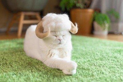 В Японии живут три кошки, у которых есть целая коллекция шляпок и шапок, сделанных из их собственной вычесанной шерсти (17 фото)