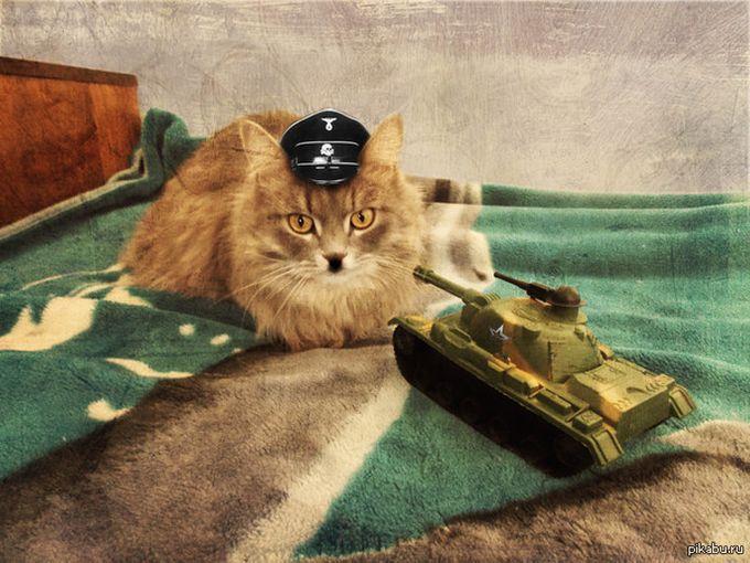 Скачать Игру Боевые Коты - фото 7