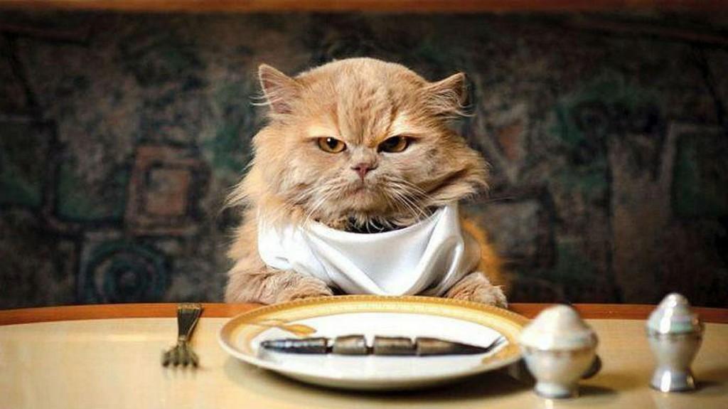 Котята для продажи - Питомник персидских кошек