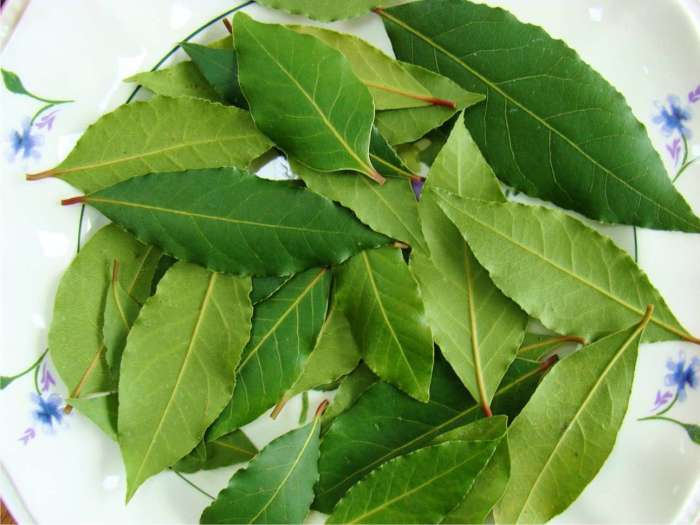 Лавровое растение подарит не только разнообразие домашним блюдам, но и приятный аромат всей кухне.   Фото: xcook.info
