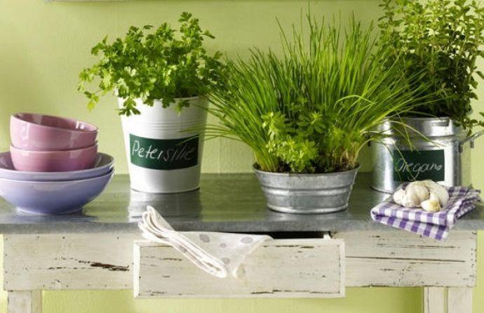 Многими домохозяйками на кухне выращиваются растения, пригодные для употребления в пищу, которые очень удачно сочетают в себе красоту и несомненную пользу для здоровья