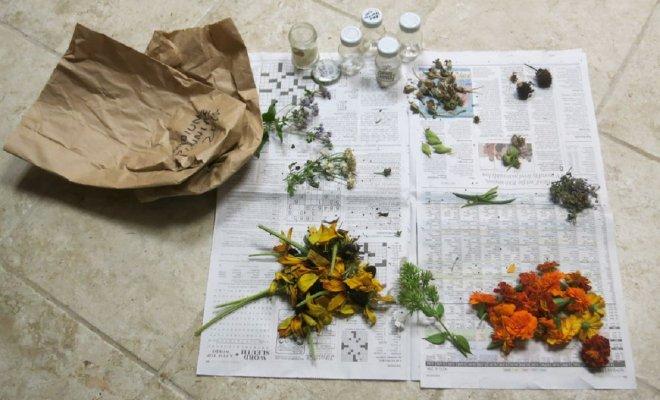 : Семена цветов для рассады