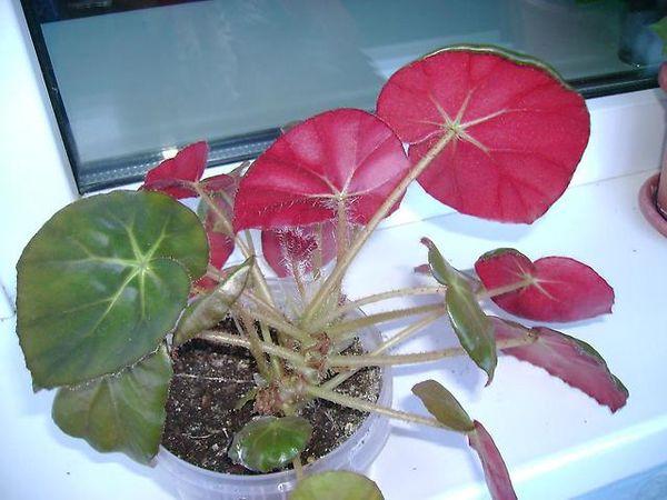 Тропическому растению нужна влажность воздуха не менее 60%