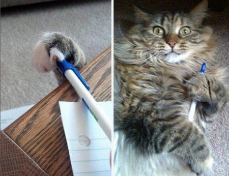 Животные, которые мешают работать