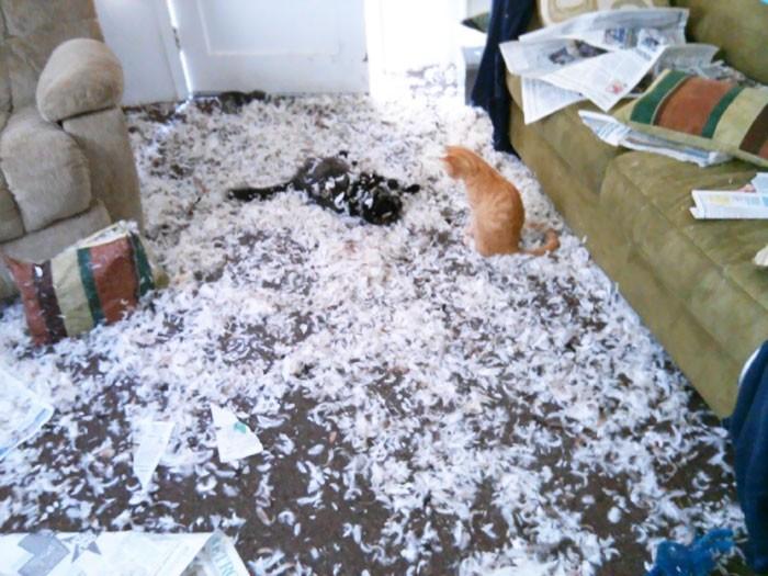 Люди оставили своих питомцев одних дома и горько пожалели об этом животные, коты, кошки, одни дома, собаки