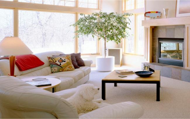 Фикус Бенджамина в хорошо освещенной части гостиной в красивом большом вазоне