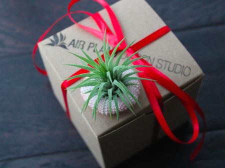 «Воздушные» растения: 14 забавных идей для дома фото 5