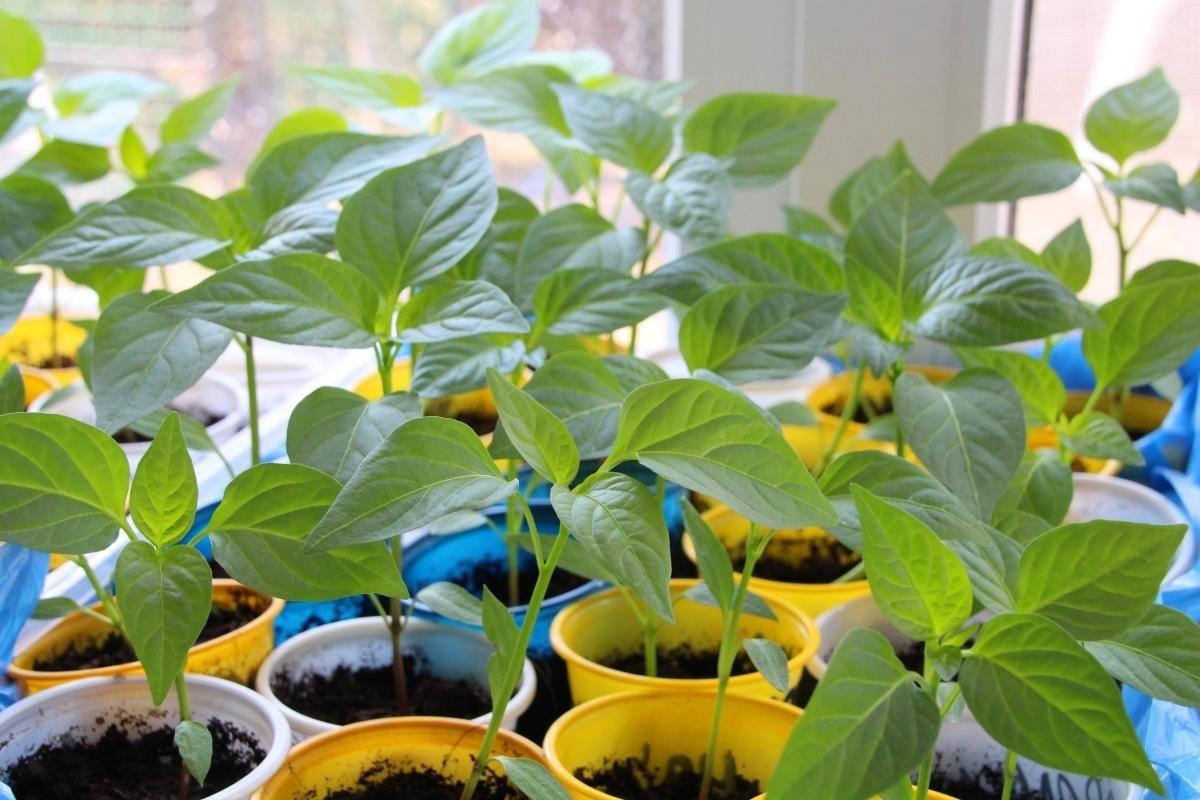 Органическое удобрение. Подойдет для всех растений без исключения