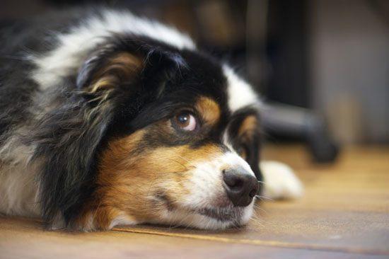 Ученые объяснили, как люди выбирают собак