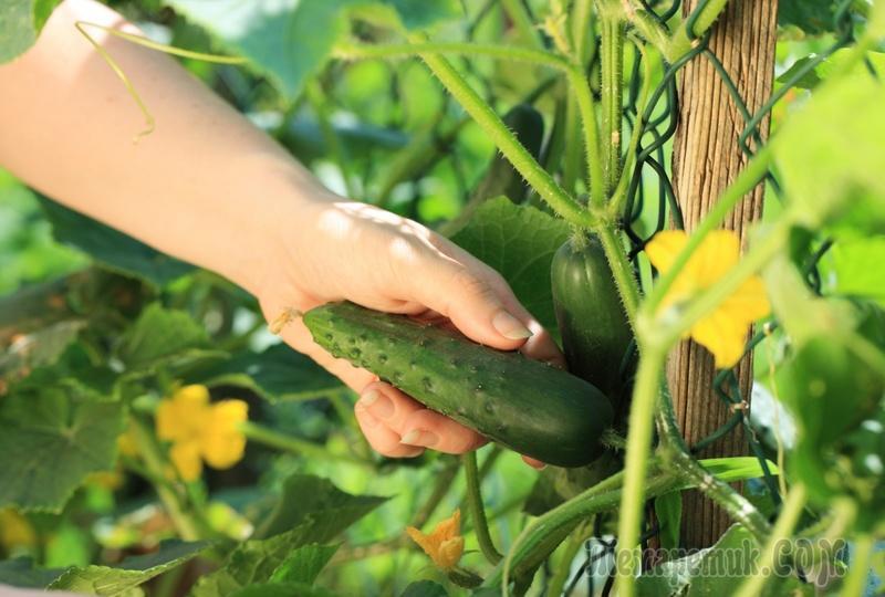 Как собрать семена в домашних условиях