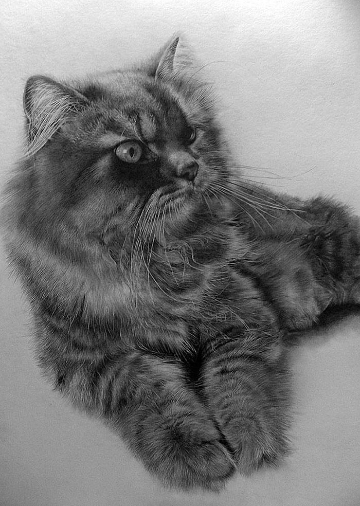 drawncats04 Мастер карандашного наброска   Пол Ланг