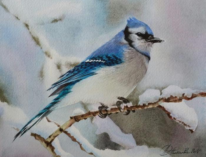 akvarel-golubaya-sojka (700x531, 351Kb)