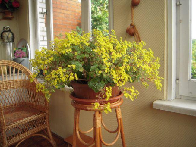 Цветочный горшок должен быть средних размеров, соответствующих объёму корневой системы растения