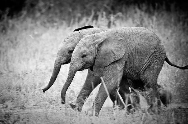Животные-близнецы - 25 очаровательных фото-10