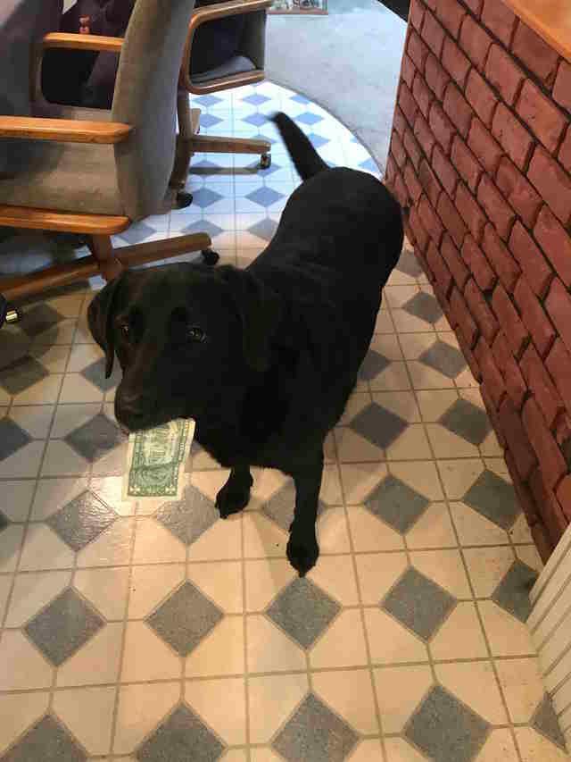 Собака уже выучила, что за рваную или обслюнявленную купюру ничего не получит, а потому обращается с деньгами весьма бережно в мире, деньги, животные, интересное, истории, прикол, собака