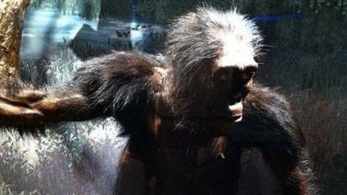 Учёные предполагают, что так выглядела эфиопская Люси.