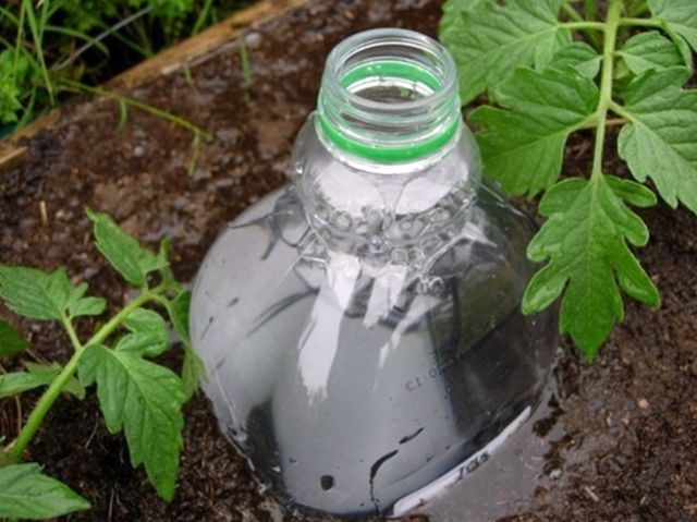 теплица помидоры полив бутылки пластиковые