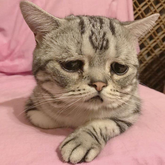 кошка луху, самая грустная кошка в мире