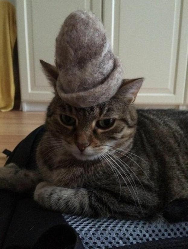 Кто куда, а я - в баню! животная мода, животные, животные и люди, коты, показ мод, смешно, фото, шляпки
